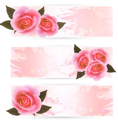 pink roses banners vector image