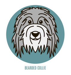 portrait of bearder collie vector image
