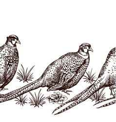 seamless pattern with pheasants vector image