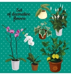 Set of potted plants with flowers vector image