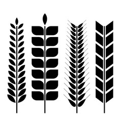 set of various wheat spikelets vector image