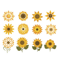 set sunflower flowers collection cartoon vector image