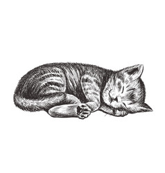 the kitten is sleeping vector image