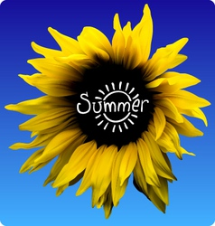 sunflower summer concept vector image