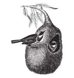 Vintage Penduline Tit Sketch vector image