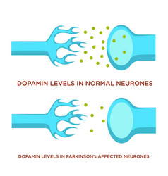 dopamin level in normal neurones and with vector image