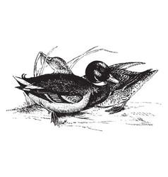 Duck vintage vector
