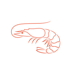 shrimp outline vector image