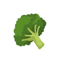 Broccoli vegetable fresh farm healthy food vector