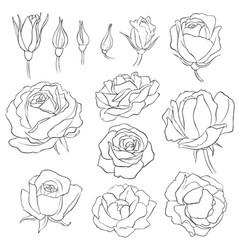flowers vintage floral set vector image