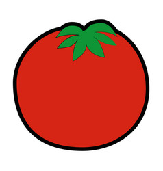isolated cute tomato vector image
