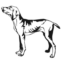 Decorative standing portrait of hungarian pointer vector