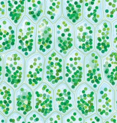 Chlorophyll Cells seamless pattern vector image vector image