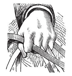 Vintage Horse Reins Sketch vector image vector image