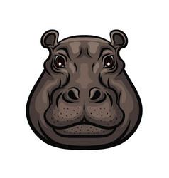 Hippopotamus animal wild muzzle head isolated vector