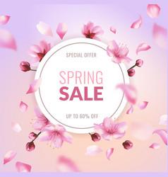 sakura sale spring discount pink cherry blossom vector image