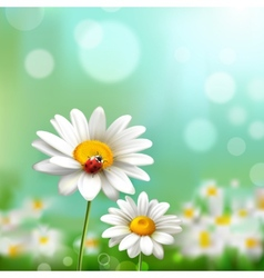 Daisies With Ladybug vector image vector image
