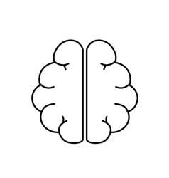 Line anatomy brain to imagination and memory vector