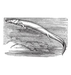 Vintage olm sketch vector