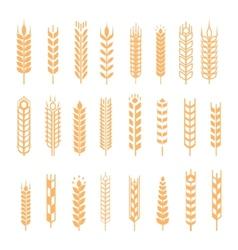 wheat ear icon set vector image vector image