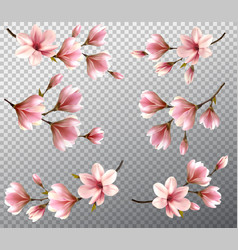 Big collection with beautiful magnolia branches vector