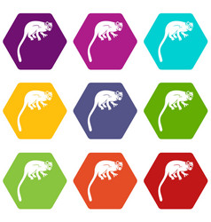 Marmoset monkey icon set color hexahedron vector