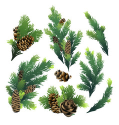 Pine tree branches and cones vector