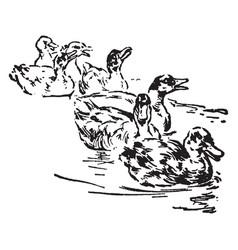Seven ducks vintage vector