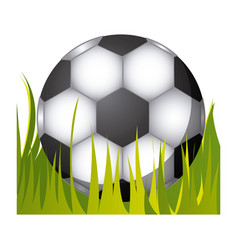 soccer ball in the grass icon vector image