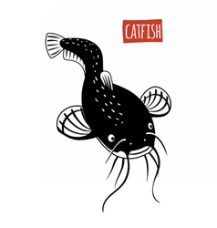 Catfish black and white vector image