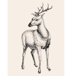 Deer hand drawn sketch vector image