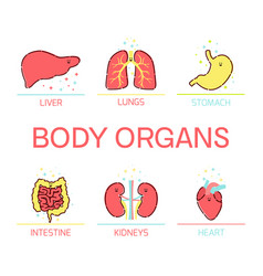 Body organs cartoon set vector