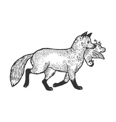 fox with chicken in mouth sketch engraving vector image