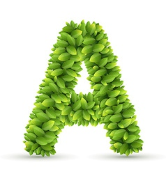 letter a alphabet green leaves vector image