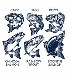 set fish emblems vintage style carp bass vector image