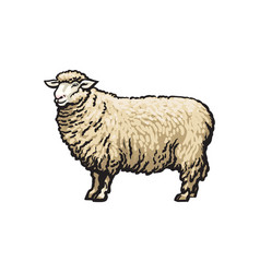 Sketch cartoon style sheep isolated vector