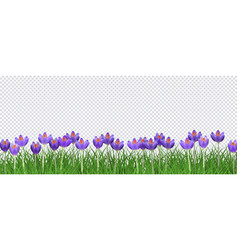 spring floral border with bright purple crocuses vector image