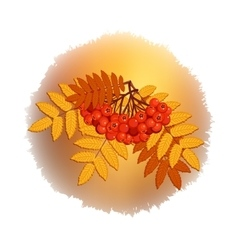 Autumn branch of rowan leaves and berries vector image vector image