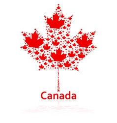 Canadian maple leaf vector image vector image