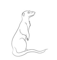 Meerkaty lines vector