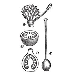 Pistil Flower Pod Sketch vector image