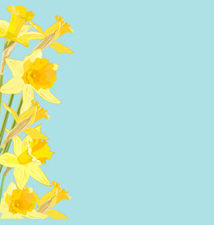 Daffodil flowers on blue background with place vector