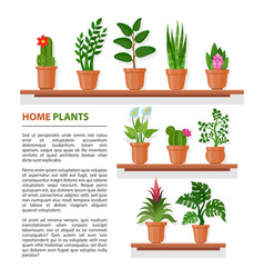 house plants banner vector image