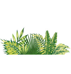 jungle composition tropical leaves pattern vector image