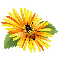 Bee on a yellow daisy vector image
