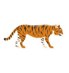 tiger action wildlife animal danger mammal fur vector image
