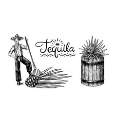 harvesting agave farmer with fruit and a wooden vector image