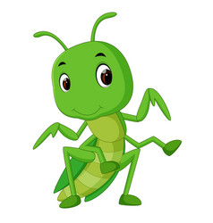 Praying mantis cartoon vector