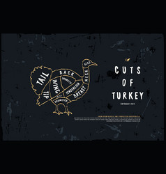 stock turkey diagram vector image
