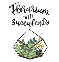 a florarium with succulents vector image